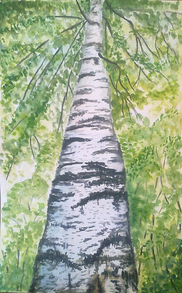 The birch by Victoria  _Ts