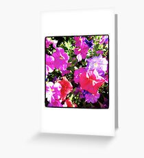 Petunias Greeting Card