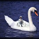 Ride a white swan by ToastedGhost