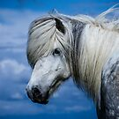 Icelandic Horse by Sue Ratcliffe