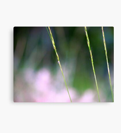 Simply Simple~ Canvas Print