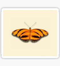 Banded Orange Sticker