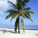 Lone Palm by Laurie Perry