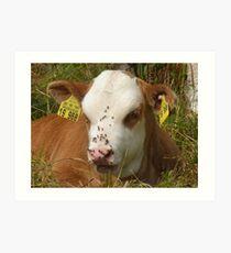 Calf Cow Animal Nature Fly Pasture Nose Art Print