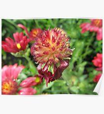 Plant Flower Nature Garden Plant -flowered Poster