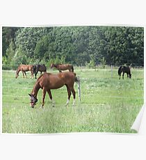 Horse Ride Animal The Stallion Mare Brown Poster