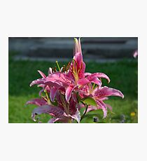 Flower Garden Blossoms Red Photographic Print