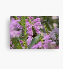 Flowers Garden Insect Hummel Pink Canvas Print