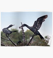 Two Cormorants Poster