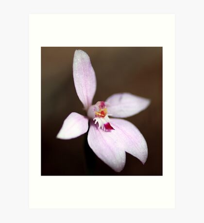 Pink Fairy Orchid Art Print