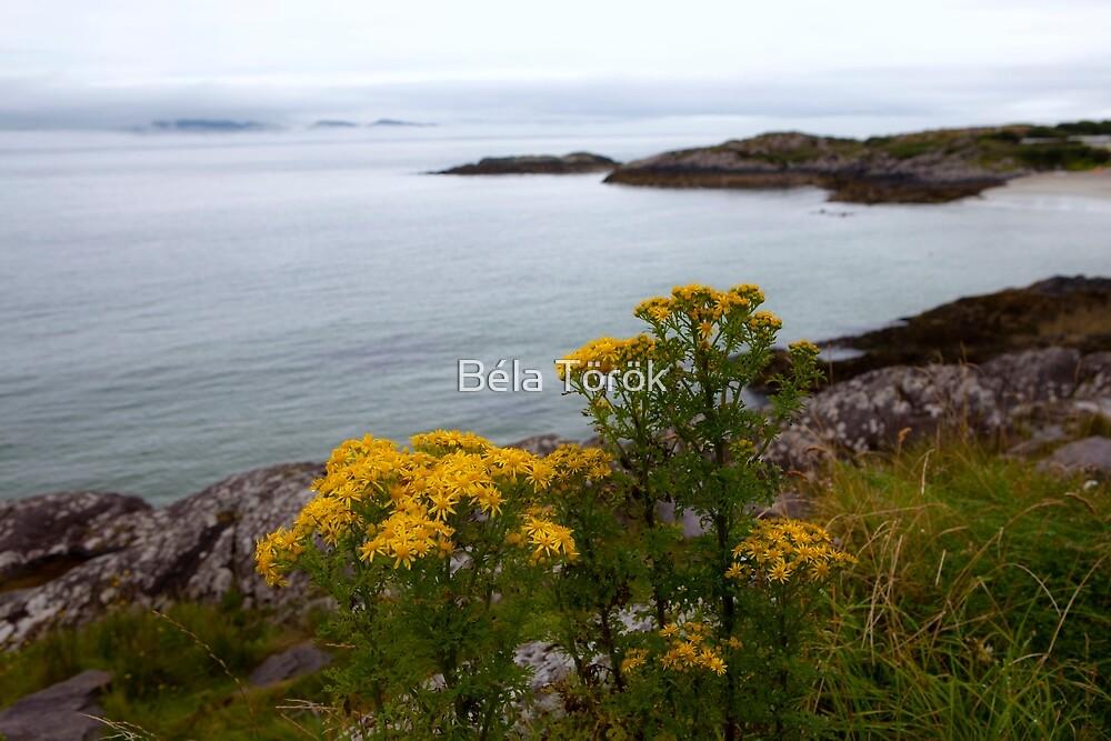 Smells of Ireland by Béla Török
