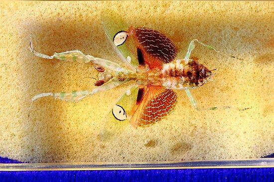 Mantis bug  by thermosoflask