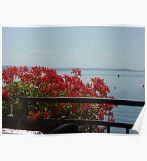 Geraniums Lake View - Trattoria del Moro Poster