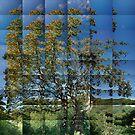 Rowan, Glen Stockdale by cuilcreations