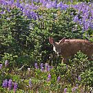 Fawn  by Barb White