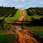 4wd fruit trees 2 by AdamBortic