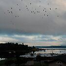 Birds by Deborah Singer