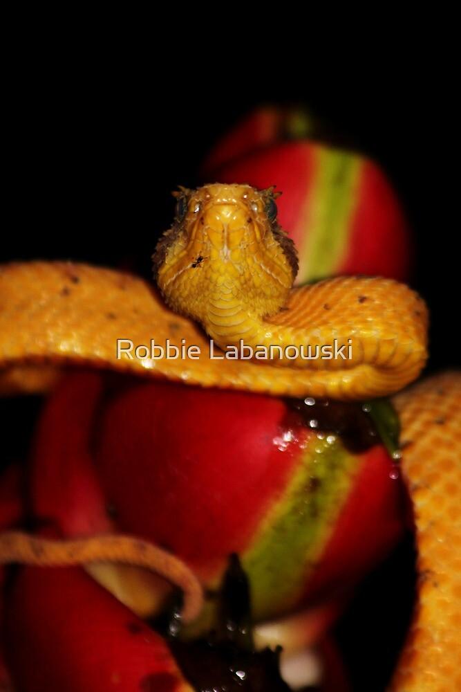 Eyelash Viper by Robbie Labanowski