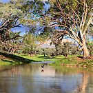 The Darling River by Sue  Fellows