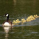 Form an orderly queue... by Richard Durrant