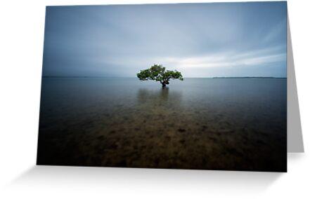 """I Stand Alone"" ∞ King Island, QLD - Australia by Jason Asher"
