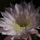 Night Flower by R-Summers