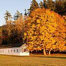 English Camp in Autumn by Deborah Singer