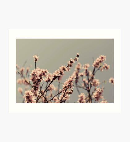 Blossoms... Art Print