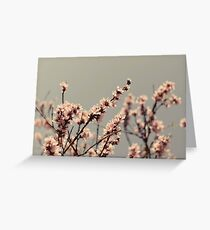 Blossoms... Greeting Card