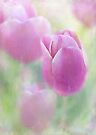 a touch of tulip by Teresa Pople