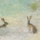 Rabbit dreamland by Lynn Starner