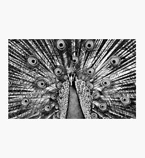 B & White Peacock Photographic Print
