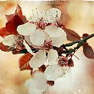 Flowering Plum by Lynn Starner