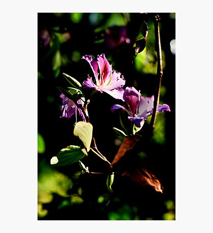 Purple blossoms down by the river Photographic Print
