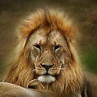 King of the Jungle  ( Leo Panthera ) by Johanna26