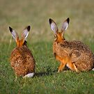 Hares Have Ears by Patricia Jacobs DPAGB BPE4