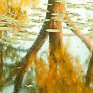 Autumn Reflection.  by Sherstin Schwartz