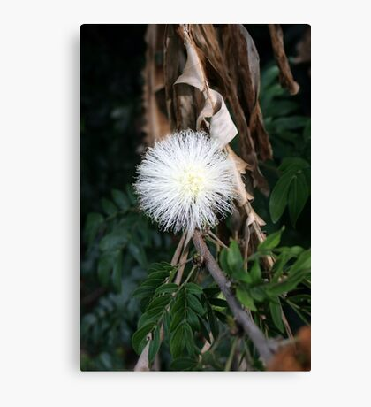 A Native Australian Canvas Print