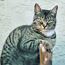 Cattitude by Noble Upchurch