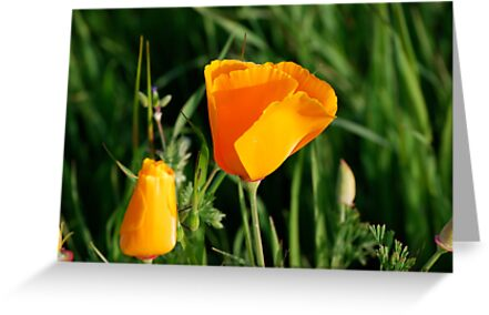Californias state flower the california poppy greeting cards by californias state flower the california poppy by kgately14 mightylinksfo