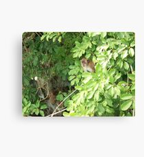 Island Monkey Canvas Print