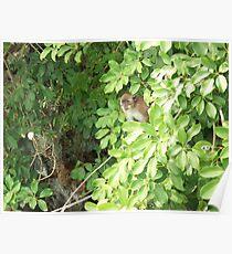 Island Monkey Poster