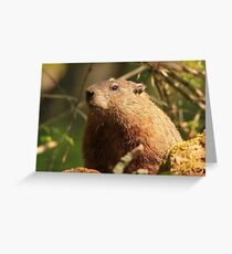Close Encounter with a Groundhog Greeting Card