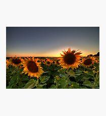 Backlit Photographic Print