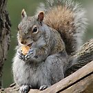 Lunch time! (Gray squirrel) by hummingbirds
