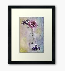 A Dusty Pink Rose Framed Print