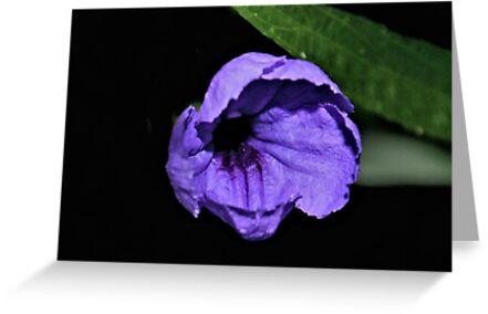 Mexican Petunia by aprilann