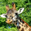 Giraffe by Brent McMurry