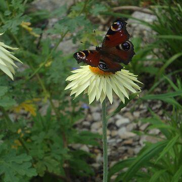 Butterfly on a Flower by Dani3ll3