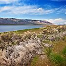 Scipio Lake by Owed To Nature